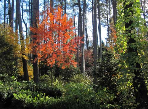 Sat Nov 11th Accidental Arboretum Tour